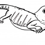 Lizard Coloring Pages for Kids