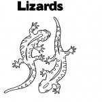 Lizard Coloring Pages for Kids Photo