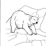 Panda Bear Coloring Pages Images