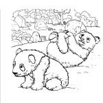 Panda Coloring Page Images