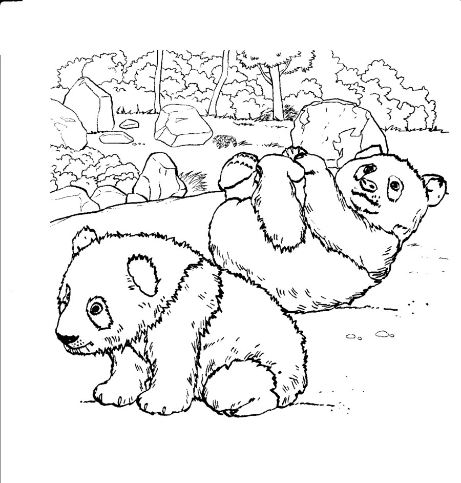 Realistic Panda Pages Coloring Pages
