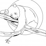 Panda Coloring Pages Pictures