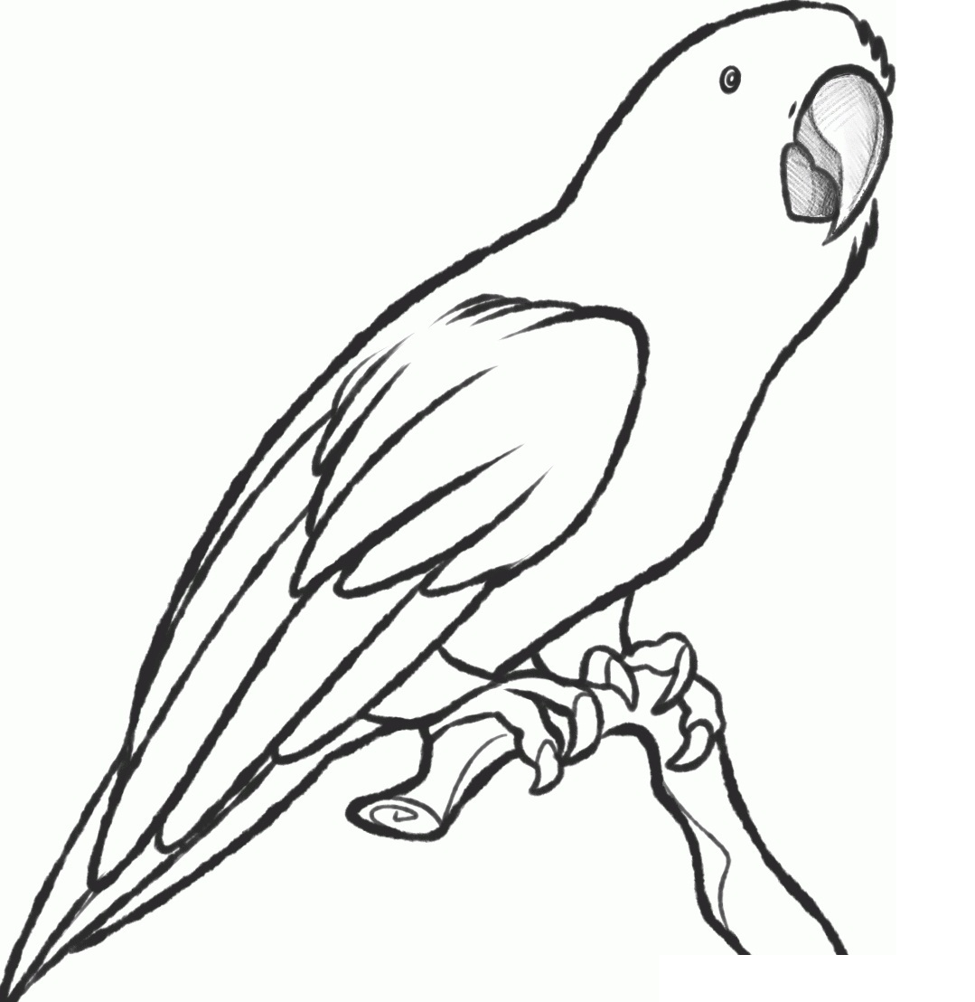 coloring pages parrot free printable parrot coloring pages for kids animal place