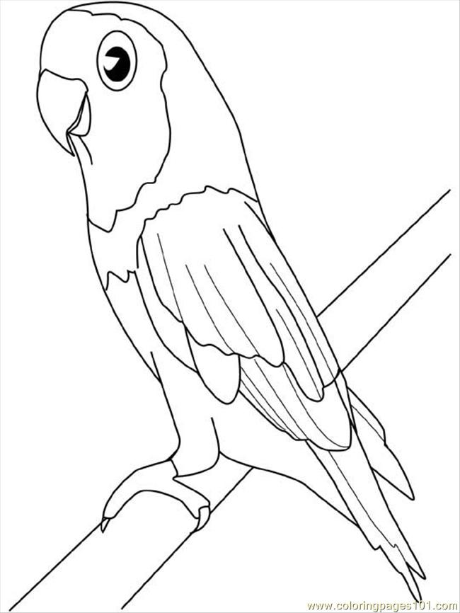 parrot coloring pages for kids photo - Parrot Pictures To Color