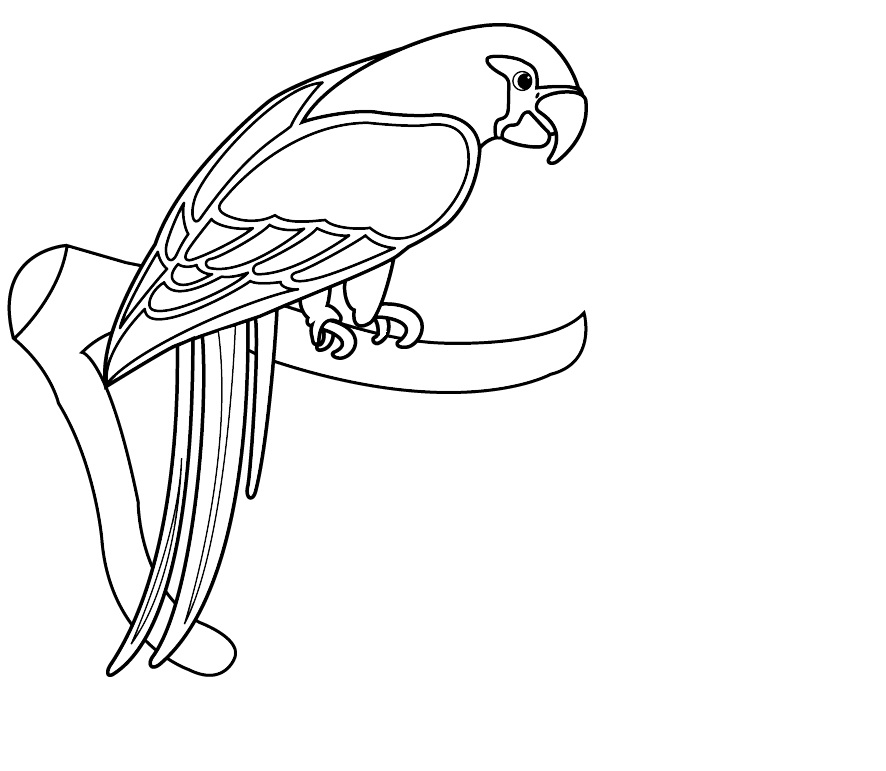 free printable parrot coloring pages for kids - Parrot Pictures To Color