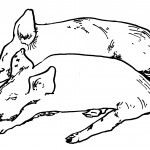 Pig Coloring Page Images