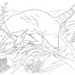 Pig Coloring Page Photo