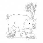 Pig Coloring Page Picture