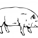 Pig Coloring Page Pictures
