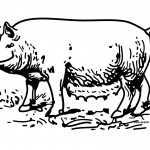 Pig Coloring Page for Kids Photos