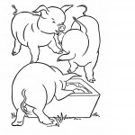 Pig Coloring Pages for Kids Images