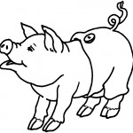 Pig Coloring Pages for Kids Pictures