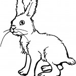Rabbit Coloring Page Images