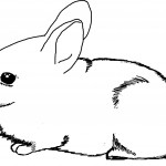 Rabbit Coloring Page for Kids Images