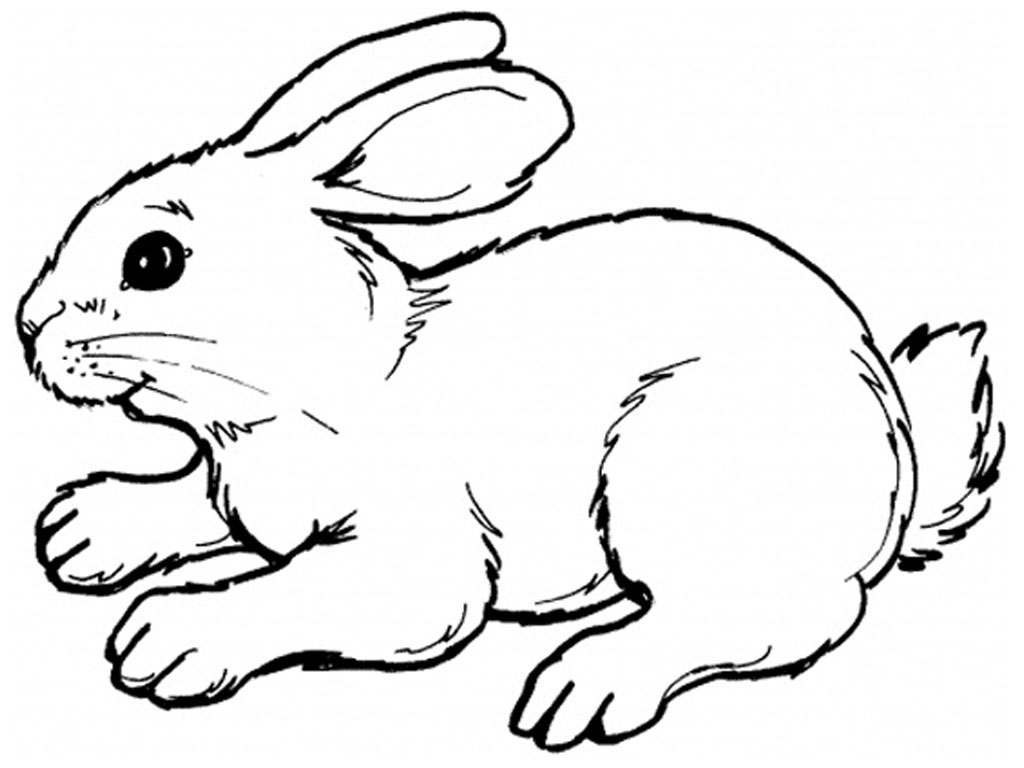 rabbit coloring pages picture