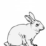Rabbit Coloring Pages for Kids Image