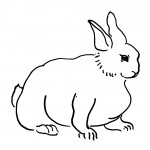 Rabbit Coloring Pages for Kids Photo