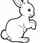 Rabbit Coloring Pages for Kids Picture
