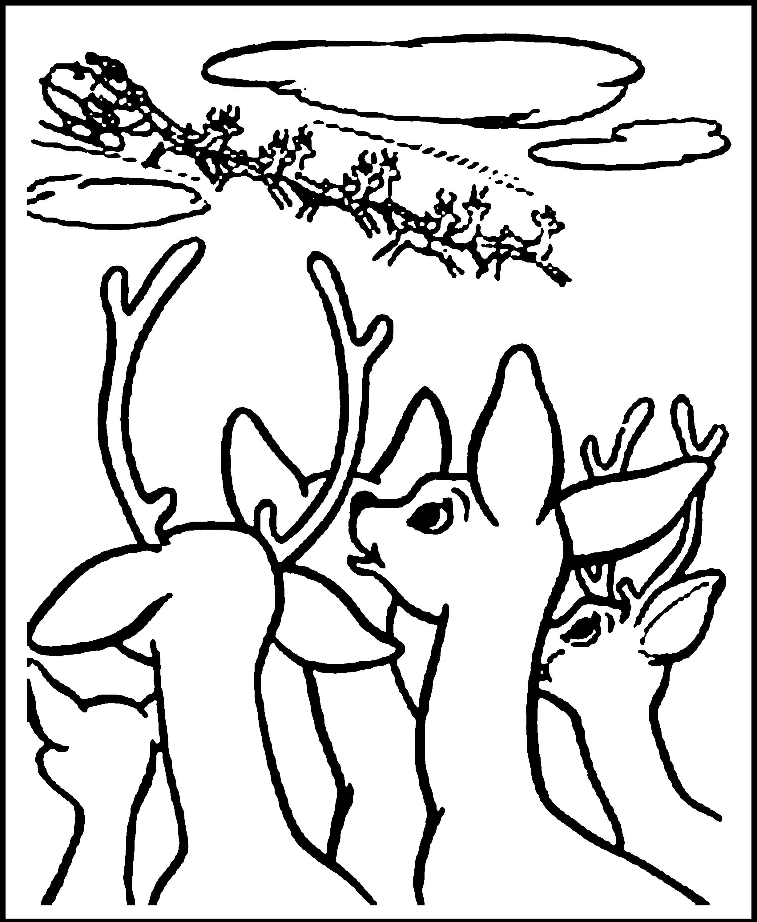 caribou coloring pages - photo#32