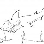 Shark Coloring Page for Kids Picture