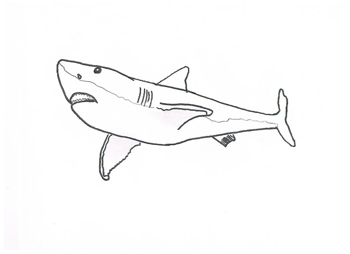 free printable shark coloring pages for kids animal place