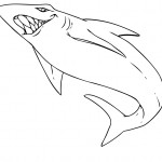 Shark Coloring Pages Image