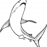 Shark Coloring Pages for Kids Image