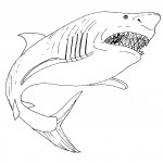 Shark Coloring Pages for Kids Images
