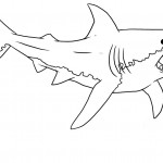 Shark Coloring Pages for Kids Pictures