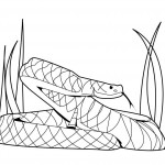 Snake Coloring Page Photo