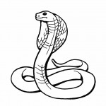 Snake Coloring Page for Kids Images