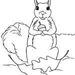 Squirrel Coloring Page Photo