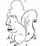 Squirrel Coloring Pages Image