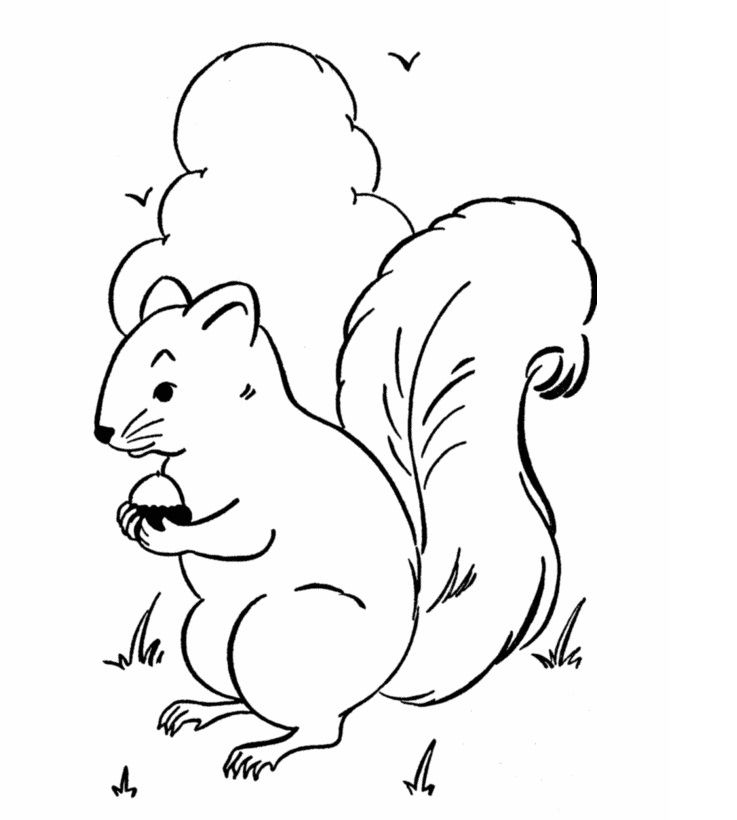 Coloring pages of a squirrel ~ Free Printable Squirrel Coloring Pages For Kids | Animal Place