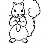 Squirrel Coloring Pages Images