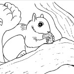 Squirrel Coloring Pages Photo
