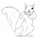 Squirrel Coloring Pages Photos