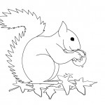 Squirrel Coloring Pages Picture