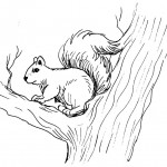 Squirrel Coloring Pages for Kids Image