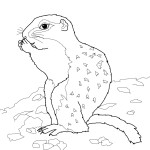 Squirrel Coloring Pages for Kids Images