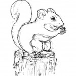 Squirrel Coloring Pages for Kids Photos