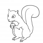 Squirrel Coloring Pages for Kids Pictures