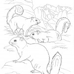 Squirrels Coloring Pages for Kids