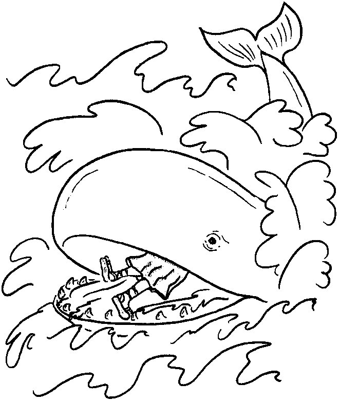 Free Printable Whale Coloring Pages For Kids Animal Place