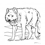 Wolf Coloring Page Image