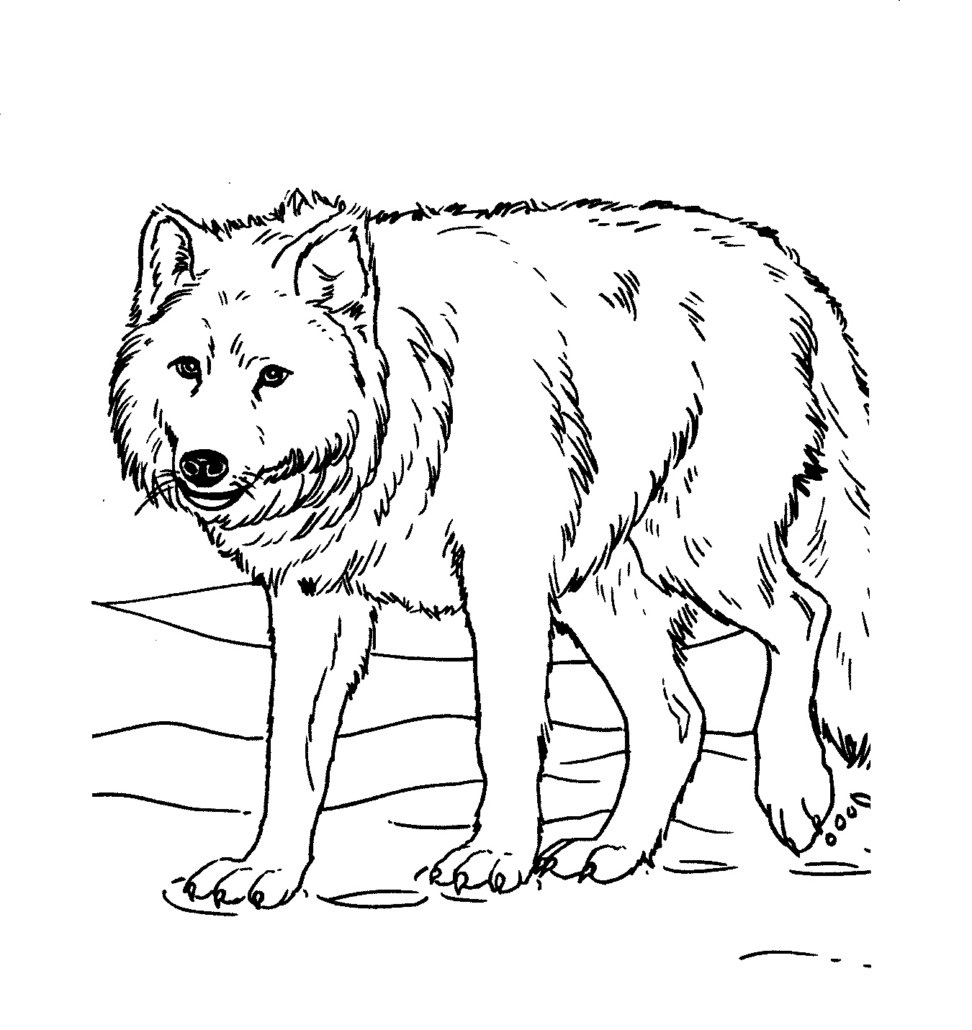 Free Printable Wolf Coloring Pages For Kids | Animal Place