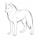 Wolf Coloring Page Photo