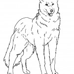 Wolf Coloring Page Photos