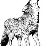 Wolf Coloring Page Pictures