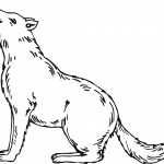 Wolf Coloring Pages Image